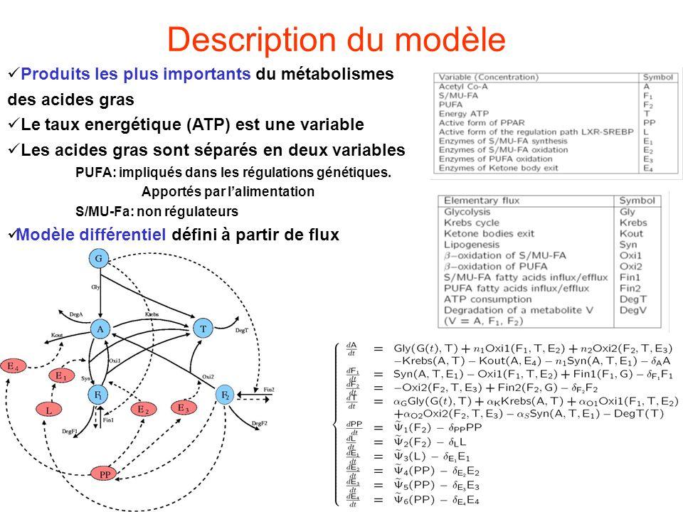 20 Description du modèle Produits les plus importants du métabolismes des acides gras Le taux energétique (ATP) est une variable Les acides gras sont séparés en deux variables PUFA: impliqués dans les régulations génétiques.