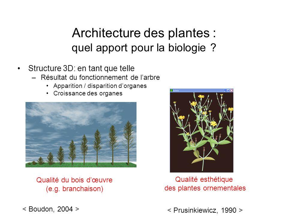Architecture des plantes : quel apport pour la biologie ? Structure 3D: en tant que telle –Résultat du fonctionnement de larbre Apparition / dispariti