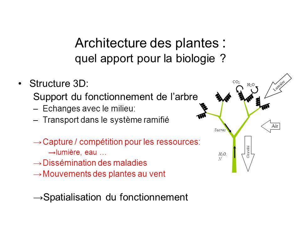 Architecture des plantes : quel apport pour la biologie ? Structure 3D: Support du fonctionnement de larbre –Echanges avec le milieu: –Transport dans