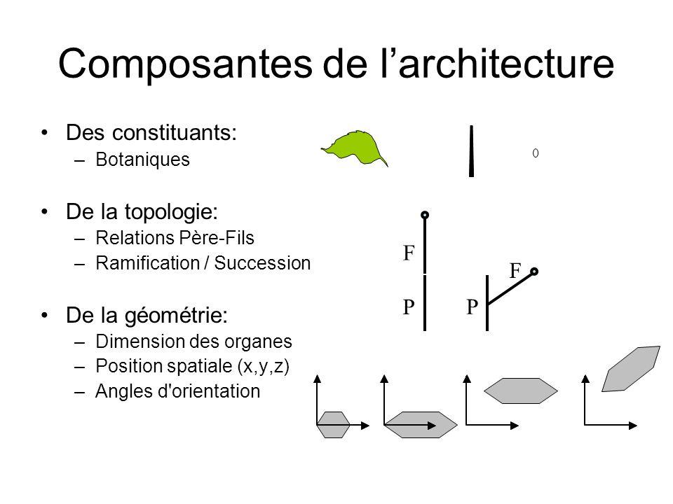Composantes de larchitecture Des constituants: –Botaniques De la topologie: –Relations Père-Fils –Ramification / Succession De la géométrie: –Dimensio