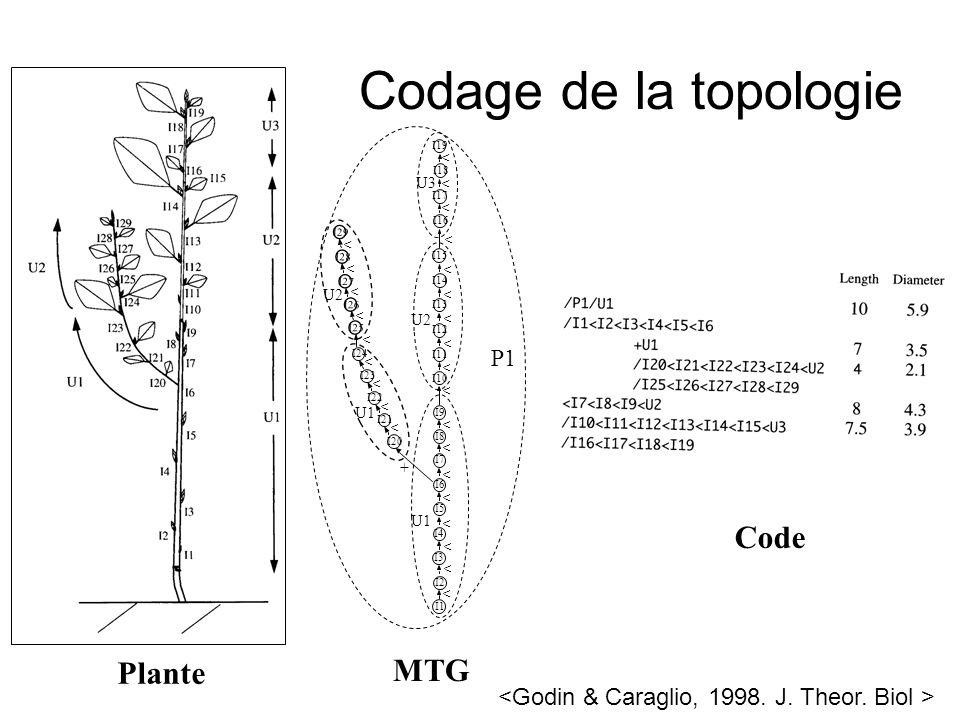 Plante MTG Code Codage de la topologie