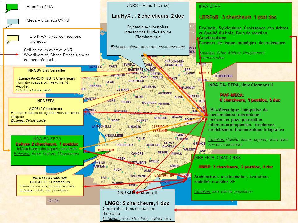 II – le dispositif de recherche actuel en France MONTPELLIER CLERMONT- FERRAND NANCY BORDEAUX INRA-EFPA LERFoB: 3 chercheurs 1 post doc Ecologie, Sylv