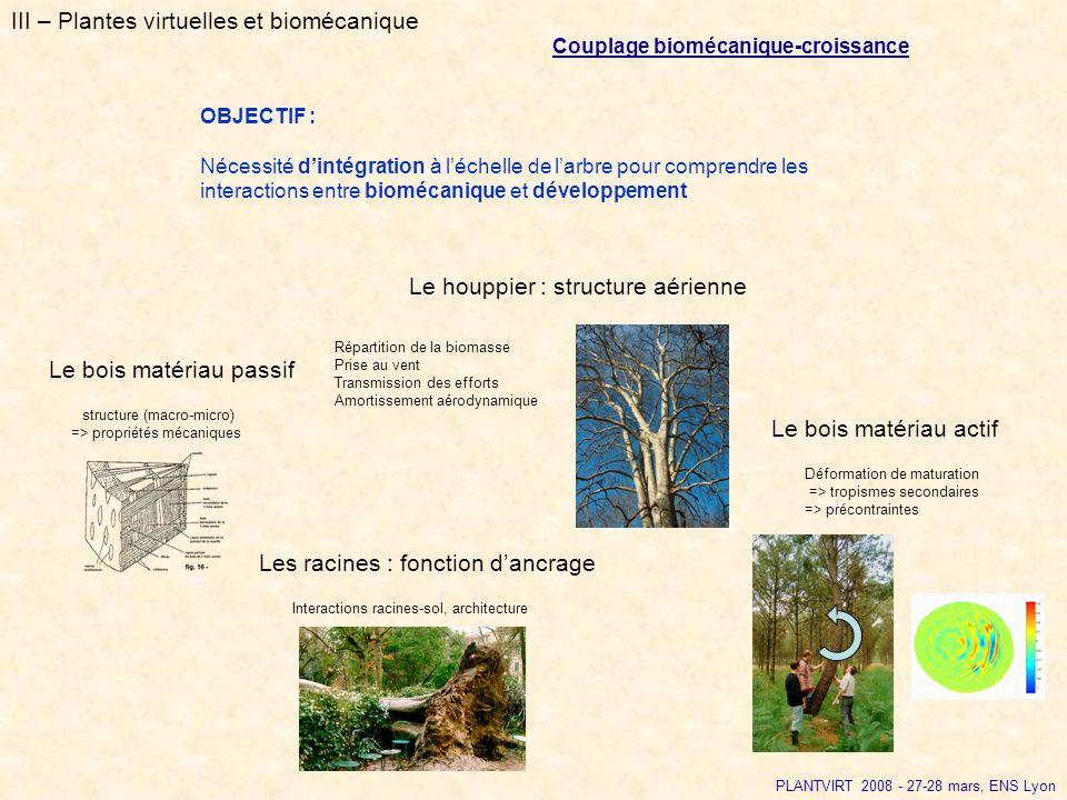 III – Plantes virtuelles et biomécanique Couplage biomécanique-croissance OBJECTIF : Nécessité dintégration à léchelle de larbre pour comprendre les i