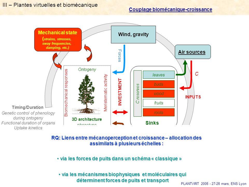 III – Plantes virtuelles et biomécanique Couplage biomécanique-croissance 3D architecture phenotype leaves fruits roots C reserves Sinks Air sources R