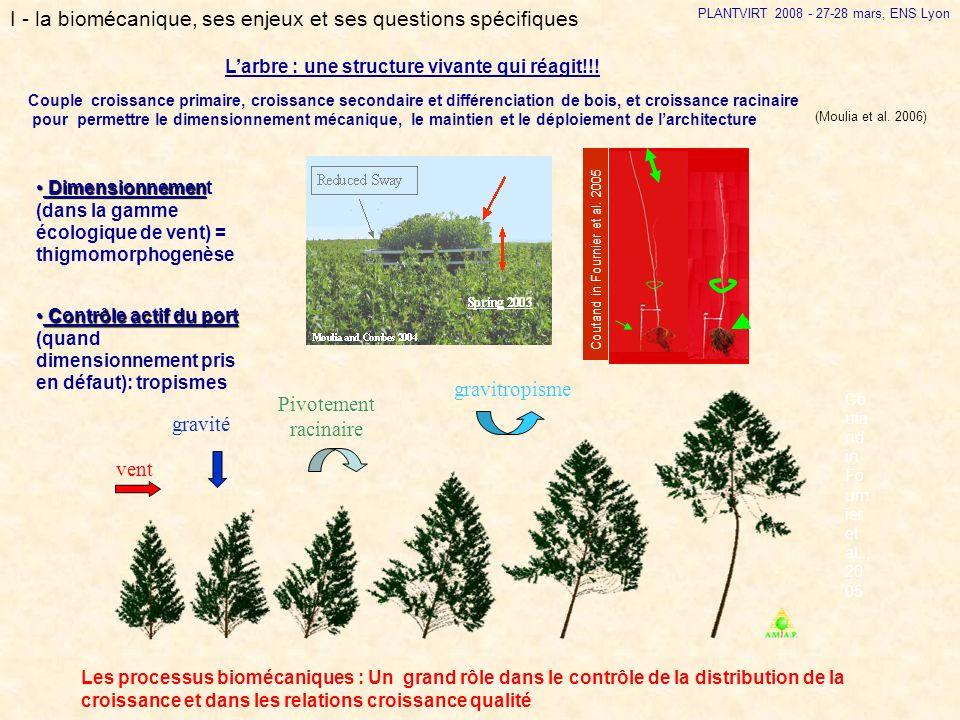 vent Pivotement racinaire gravitropisme Larbre : une structure vivante qui réagit!!! PLANTVIRT 2008 - 27-28 mars, ENS Lyon I - la biomécanique, ses en