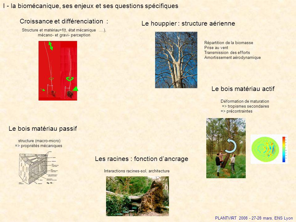 I - la biomécanique, ses enjeux et ses questions spécifiques Le bois matériau passif structure (macro-micro) => propriétés mécaniques Les racines : fo