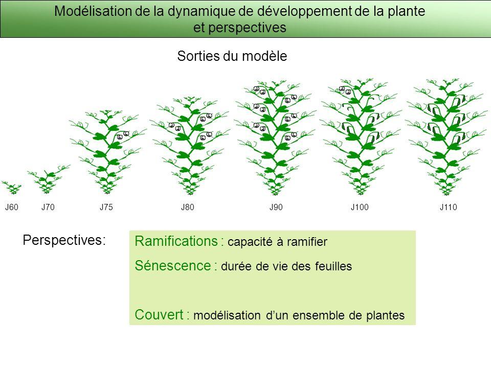Modélisation de la dynamique de développement de la plante et perspectives J60J70J75J80J90J100J110 Ramifications : capacité à ramifier Sénescence : du