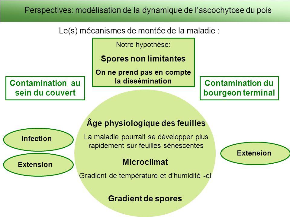 Perspectives: modélisation de la dynamique de lascochytose du pois Le(s) mécanismes de montée de la maladie : Âge physiologique des feuilles La maladi