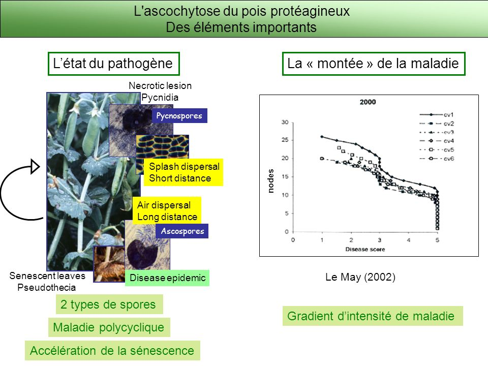 Senescent leaves Pseudothecia Necrotic lesion Pycnidia Air dispersal Long distance Disease epidemic Ascospores Pycnospores Létat du pathogèneLa « mont