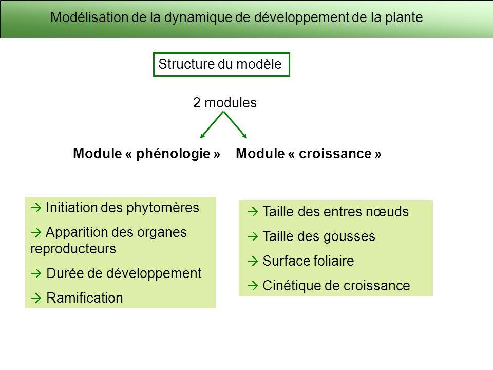Modélisation de la dynamique de développement de la plante Structure du modèle 2 modules Module « phénologie »Module « croissance » Initiation des phytomères Apparition des organes reproducteurs Durée de développement Ramification Taille des entres nœuds Taille des gousses Surface foliaire Cinétique de croissance