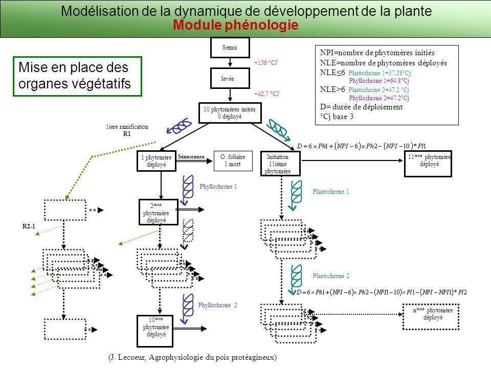 Modélisation de la dynamique de développement de la plante Mise en place des organes végétatifs (J. Lecoeur, Agrophysiologie du pois protéagineux) NPI