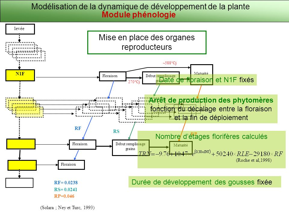 ~588°Cj 270°Cj Début remplissage grains Maturité RS RP Début remplissage grains Maturité Modélisation de la dynamique de développement de la plante Mise en place des organes reproducteurs (Solara ; Ney et Turc, 1993) RF= 0.0238 RS= 0.0241 RP=0.046 Floraison levée N1F Floraison RF Arrêt de production des phytomères fonction du décalage entre la floraison et la fin de déploiement Module phénologie Date de floraison et N1F fixés Nombre détages florifères calculés (Roche et al,1998) Durée de développement des gousses fixée