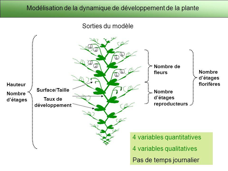 Modélisation de la dynamique de développement de la plante et perspectives J60J70J75J80J90J100J110 Ramifications : capacité à ramifier Sénescence : durée de vie des feuilles Couvert : modélisation dun ensemble de plantes Perspectives: Sorties du modèle