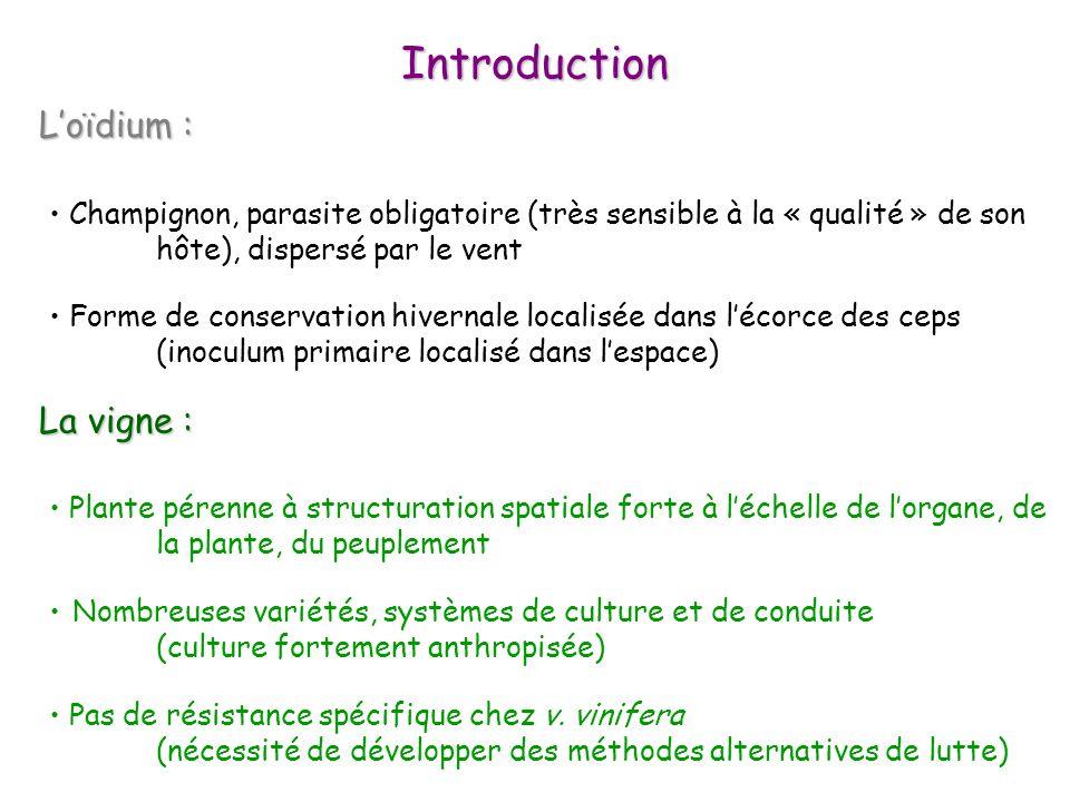 Introduction Loïdium : Loïdium : La vigne : La vigne : Plante pérenne à structuration spatiale forte à léchelle de lorgane, de la plante, du peuplemen