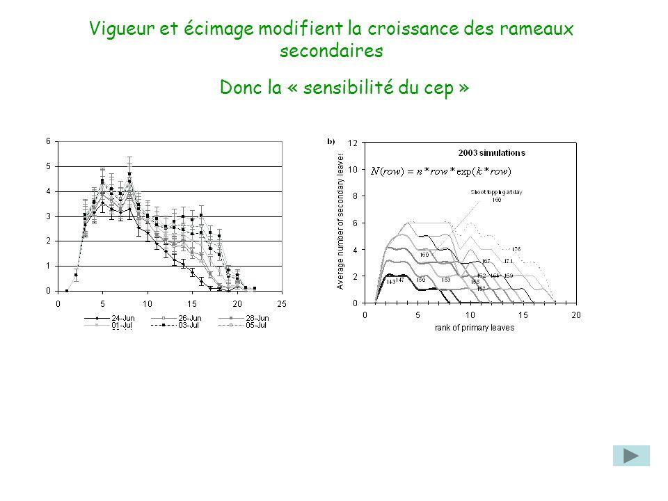 Vigueur et écimage modifient la croissance des rameaux secondaires Donc la « sensibilité du cep »