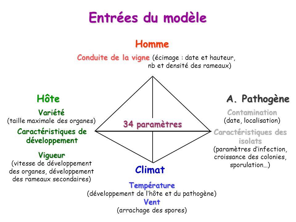 Entrées du modèle A. Pathogène HôteHomme Climat Température (développement de lhôte et du pathogène)Vent (arrachage des spores) Conduite de la vigne C