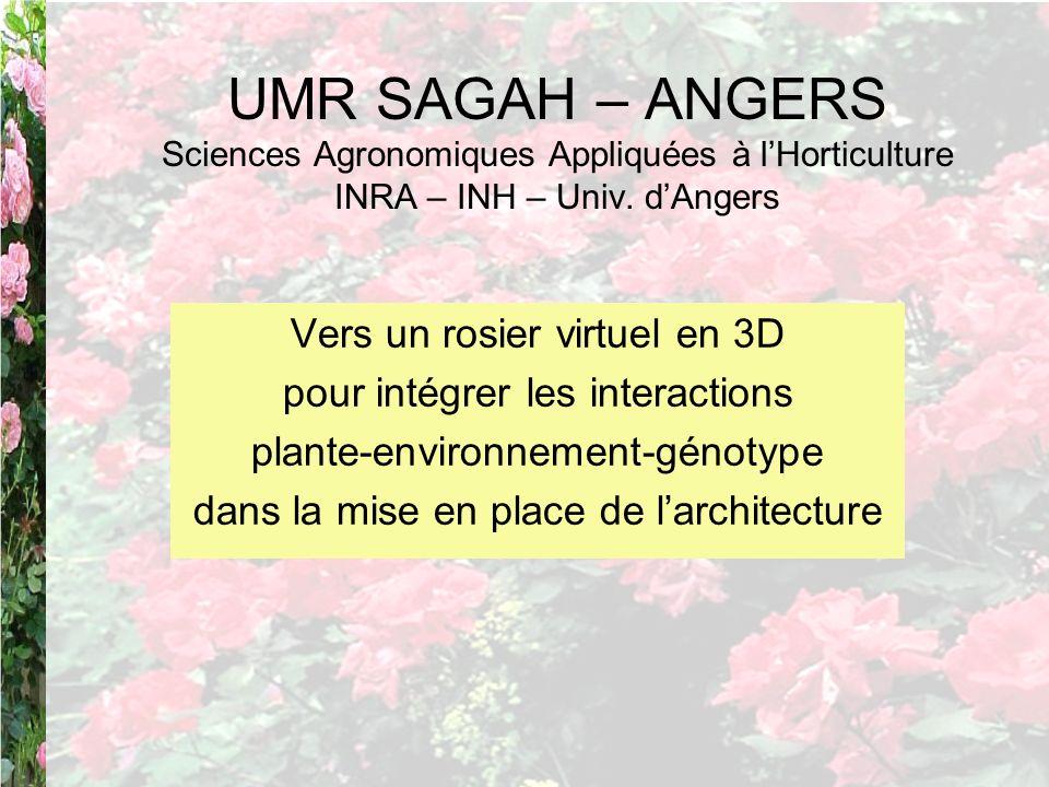 UMR SAGAH – ANGERS Sciences Agronomiques Appliquées à lHorticulture INRA – INH – Univ. dAngers Vers un rosier virtuel en 3D pour intégrer les interact