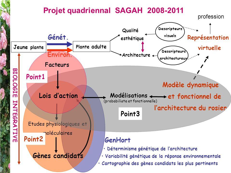 Jeune plante Plante adulte Qualité esthétique Descripteurs visuels Architecture Descripteurs architecturaux Projet quadriennal SAGAH 2008-2011 Génét.