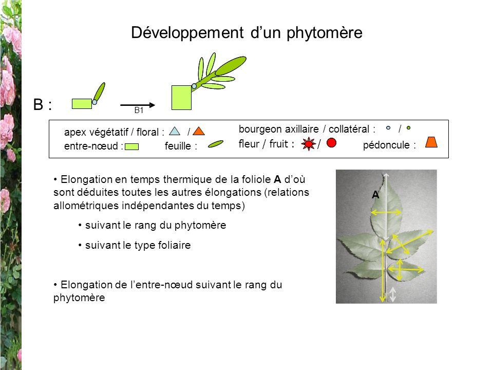 Développement dun phytomère B : B1 entre-nœud :feuille : apex végétatif / floral : / pédoncule : fleur / fruit : / bourgeon axillaire / collatéral : /