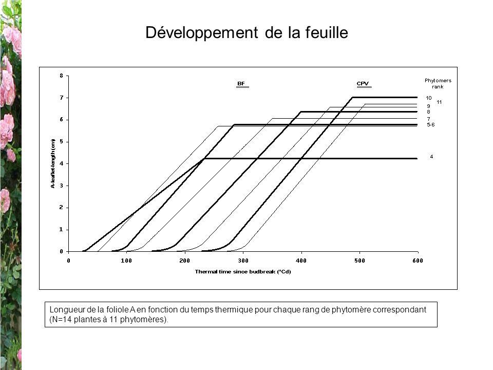 Développement de la feuille Longueur de la foliole A en fonction du temps thermique pour chaque rang de phytomère correspondant (N=14 plantes à 11 phy