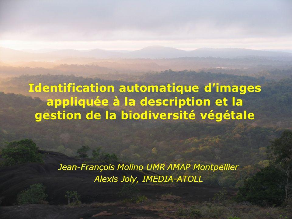 Identification automatique dimages appliquée à la description et la gestion de la biodiversité végétale Jean-François Molino UMR AMAP Montpellier Alex