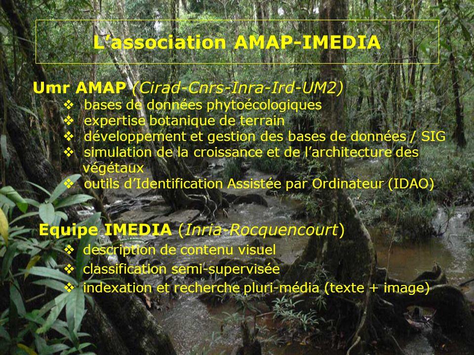 Lassociation AMAP-IMEDIA Equipe IMEDIA (Inria-Rocquencourt) description de contenu visuel classification semi-supervisée indexation et recherche pluri