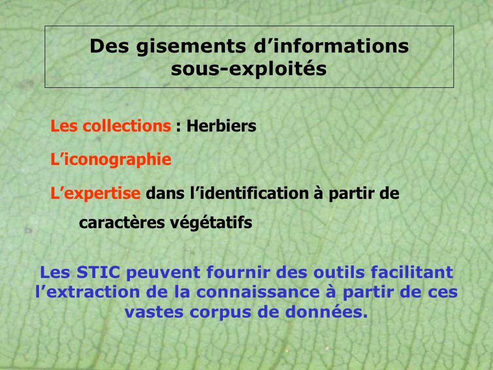 Les collections : Herbiers Liconographie Lexpertise dans lidentification à partir de caractères végétatifs Des gisements dinformations sous-exploités