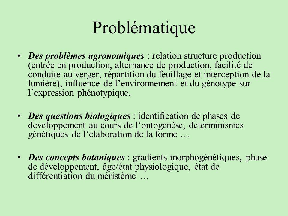 Problématique Des problèmes agronomiques : relation structure production (entrée en production, alternance de production, facilité de conduite au verg