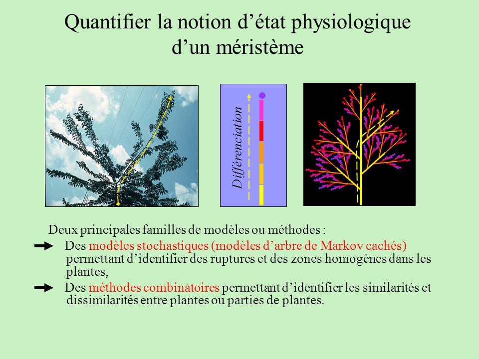 Quantifier la notion détat physiologique dun méristème Deux principales familles de modèles ou méthodes : Des modèles stochastiques (modèles darbre de