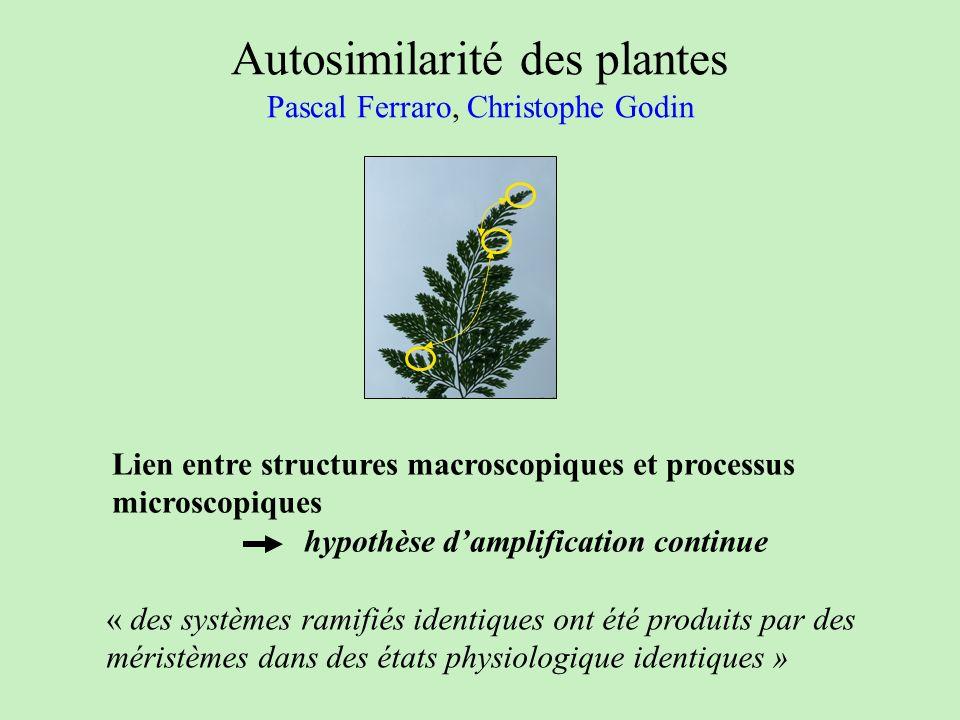 Autosimilarité des plantes Pascal Ferraro, Christophe Godin « des systèmes ramifiés identiques ont été produits par des méristèmes dans des états phys