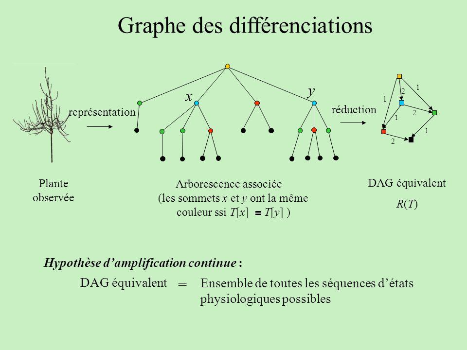 Graphe des différenciations 1 1 2 2 1 2 1 Plante observée Arborescence associée DAG équivalent R(T) réduction représentation (les sommets x et y ont l