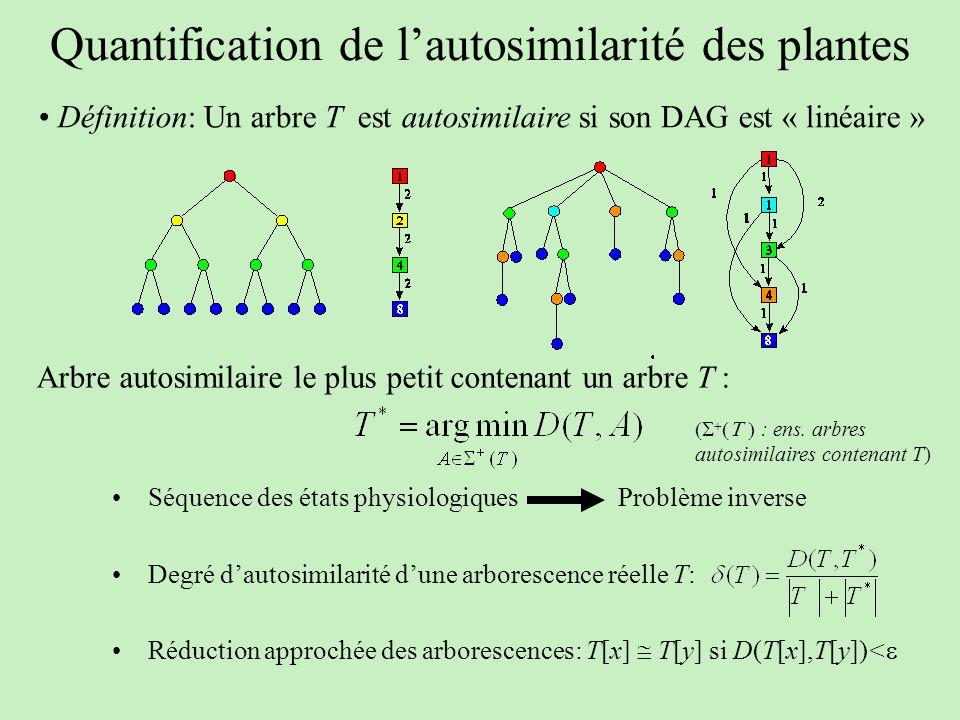 Quantification de lautosimilarité des plantes Définition: Un arbre T est autosimilaire si son DAG est « linéaire » Séquence des états physiologiques D