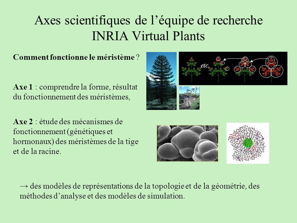 Axes scientifiques de léquipe de recherche INRIA Virtual Plants etc. des modèles de représentations de la topologie et de la géométrie, des méthodes d
