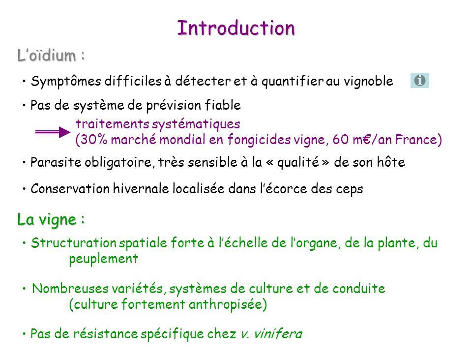 Introduction Loïdium : Loïdium : La vigne : La vigne : Structuration spatiale forte à léchelle de lorgane, de la plante, du peuplement Nombreuses vari