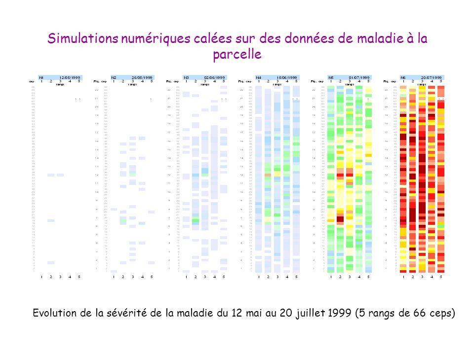 Simulations numériques calées sur des données de maladie à la parcelle Evolution de la sévérité de la maladie du 12 mai au 20 juillet 1999 (5 rangs de