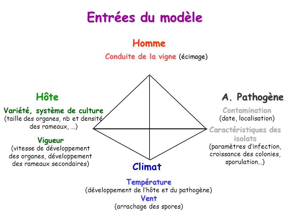 Entrées du modèle A. Pathogène HôteHomme Climat Température (développement de lhôte et du pathogène)Vent (arrachage des spores) Conduite de la vigne (