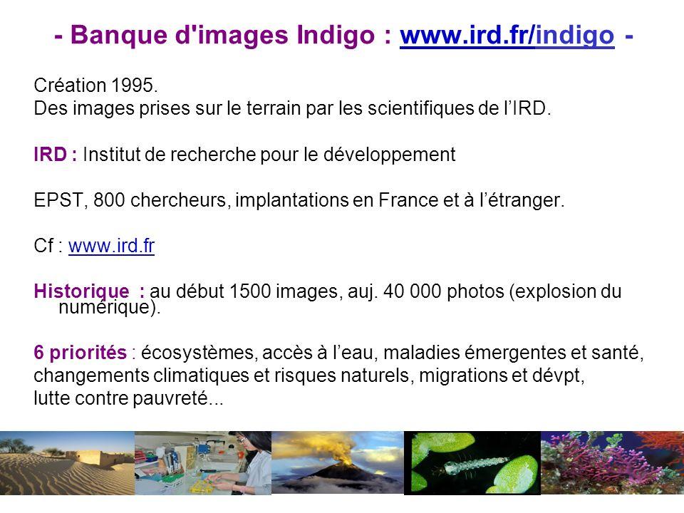 - Banque d'images Indigo : www.ird.fr/indigo -www.ird.fr/ Création 1995. Des images prises sur le terrain par les scientifiques de lIRD. IRD : Institu