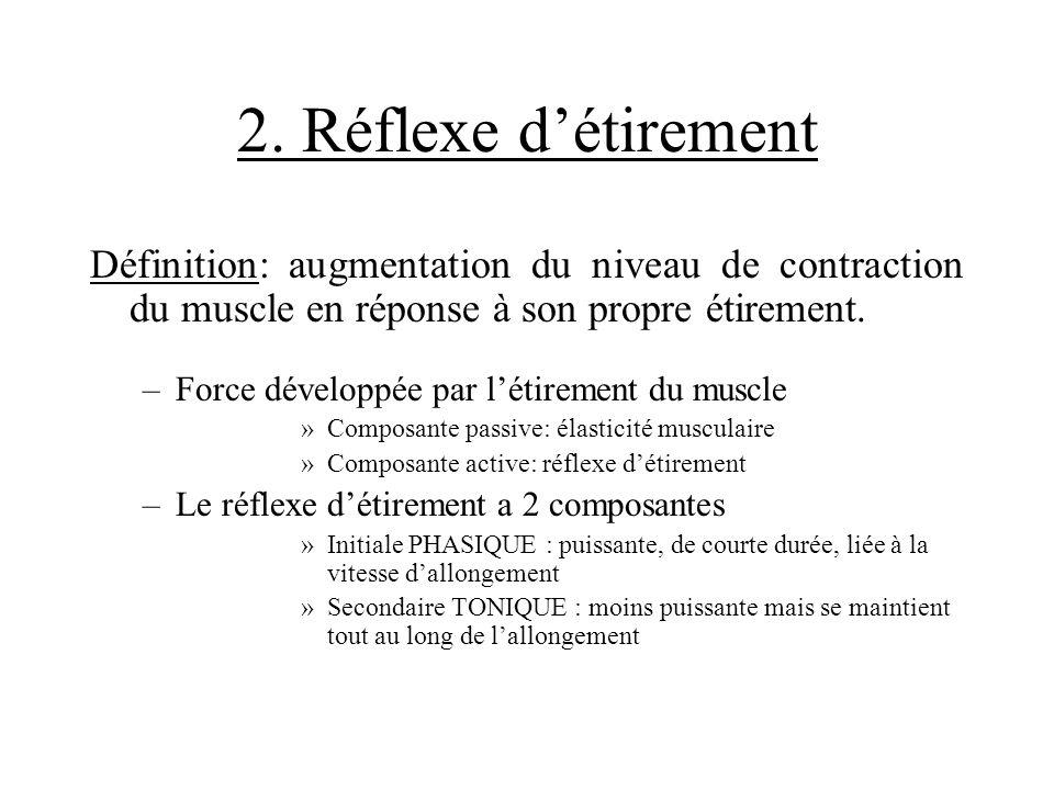 2. Réflexe détirement Définition: augmentation du niveau de contraction du muscle en réponse à son propre étirement. –Force développée par létirement