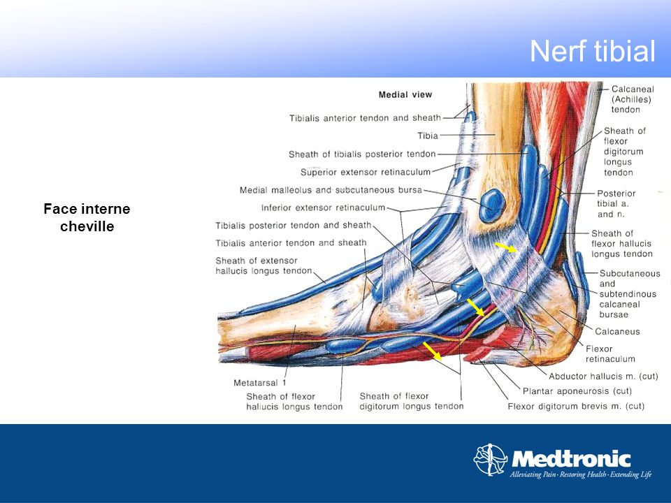 Face plantaire pied Nerf tibial