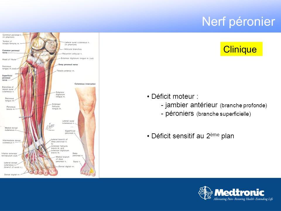 Déficit moteur : - jambier antérieur (branche profonde) - péroniers (branche superficielle) Clinique Déficit sensitif au 2 ème plan Nerf péronier