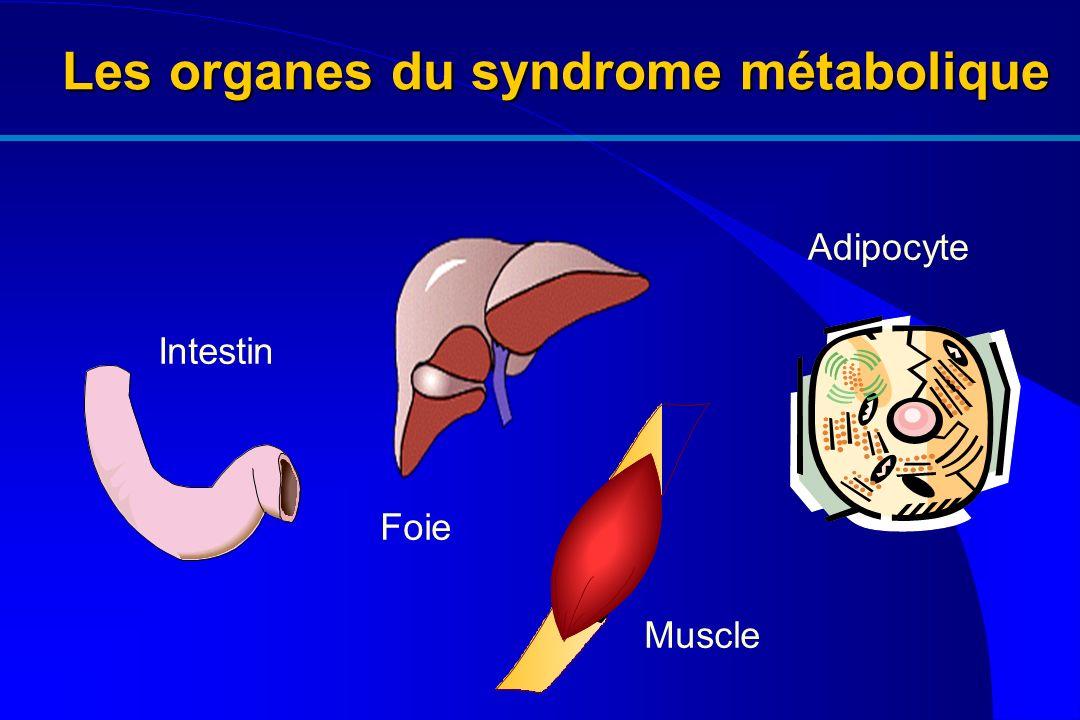 Les organes du syndrome métabolique Intestin Foie Muscle Adipocyte