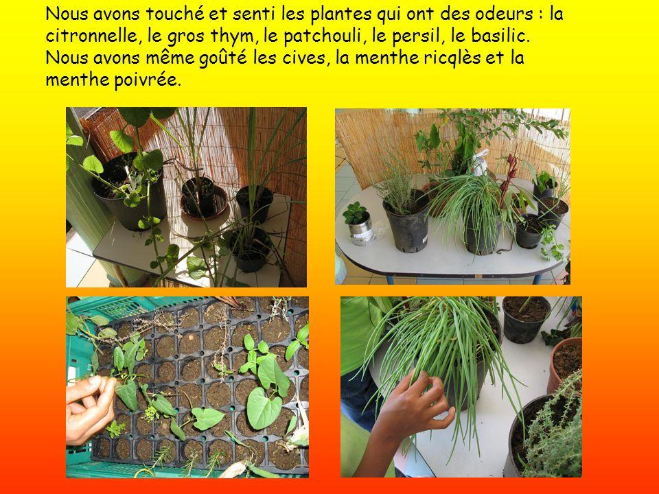 Nous avons touché et senti les plantes qui ont des odeurs : la citronnelle, le gros thym, le patchouli, le persil, le basilic. Nous avons même goûté l