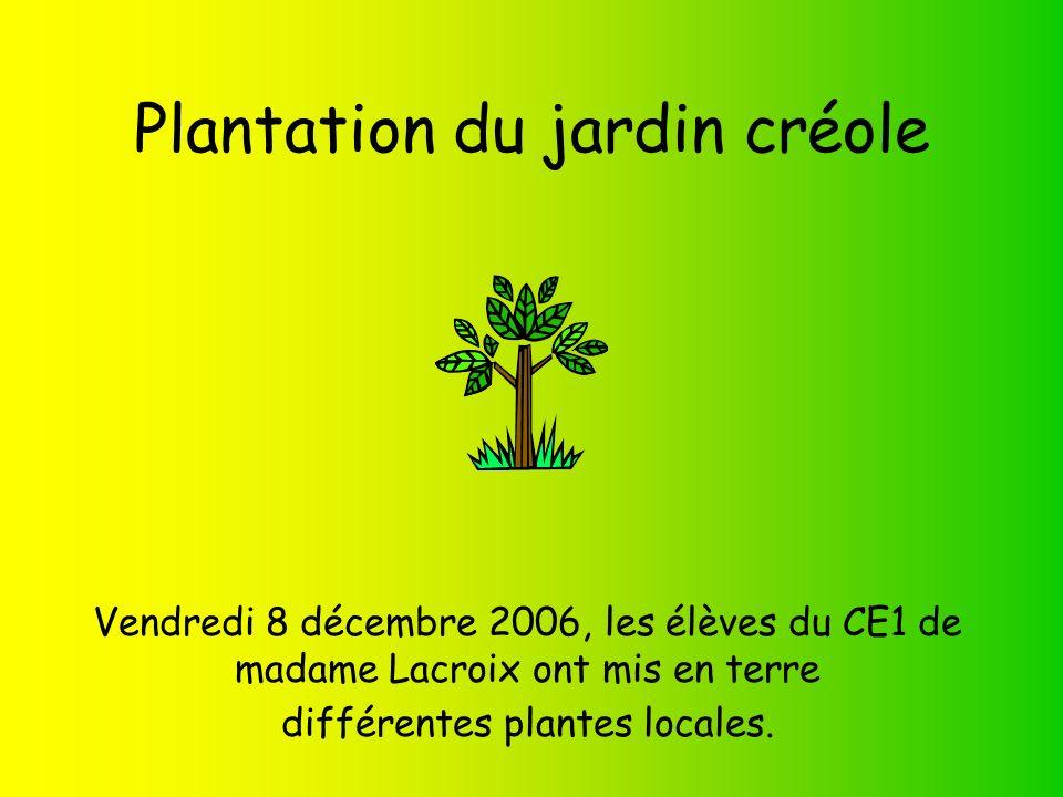 Plantation du jardin créole Vendredi 8 décembre 2006, les élèves du CE1 de madame Lacroix ont mis en terre différentes plantes locales.
