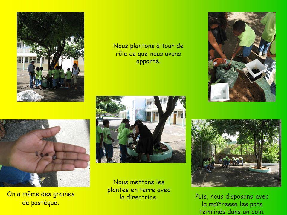 Noublions pas détiqueter nos plantes : du gros thym, du bambou,de la citronnelle.