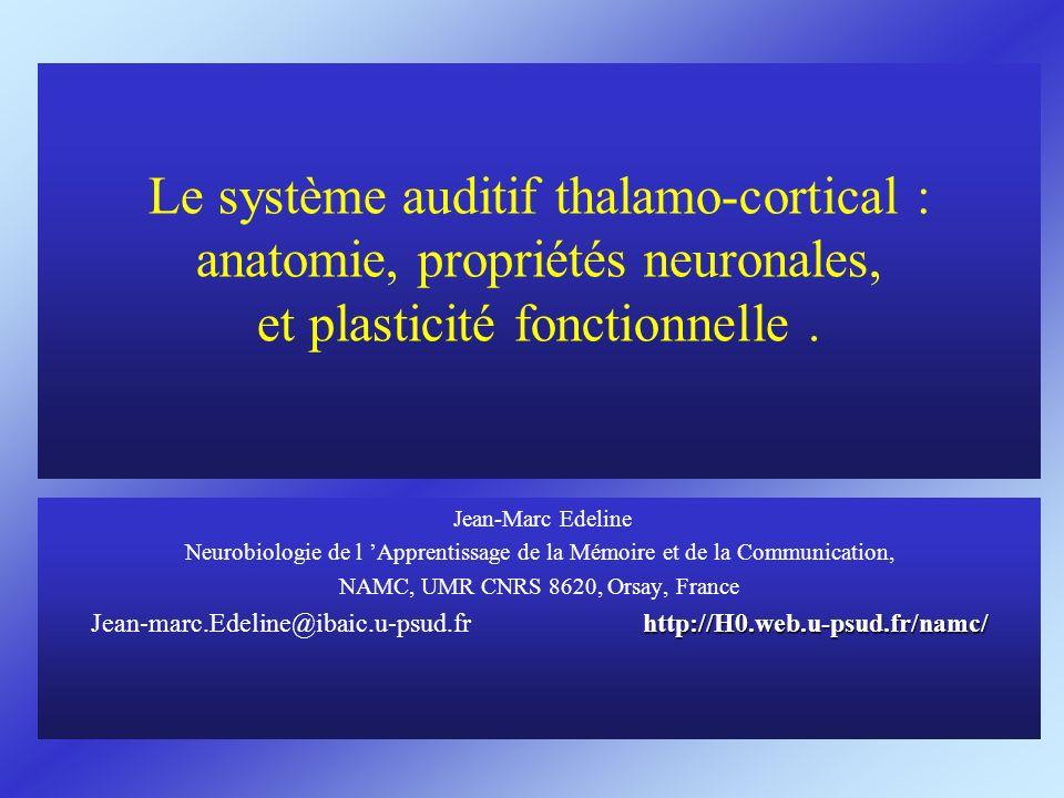 Le système auditif thalamo-cortical : anatomie, propriétés neuronales, et plasticité fonctionnelle. Jean-Marc Edeline Neurobiologie de l Apprentissage
