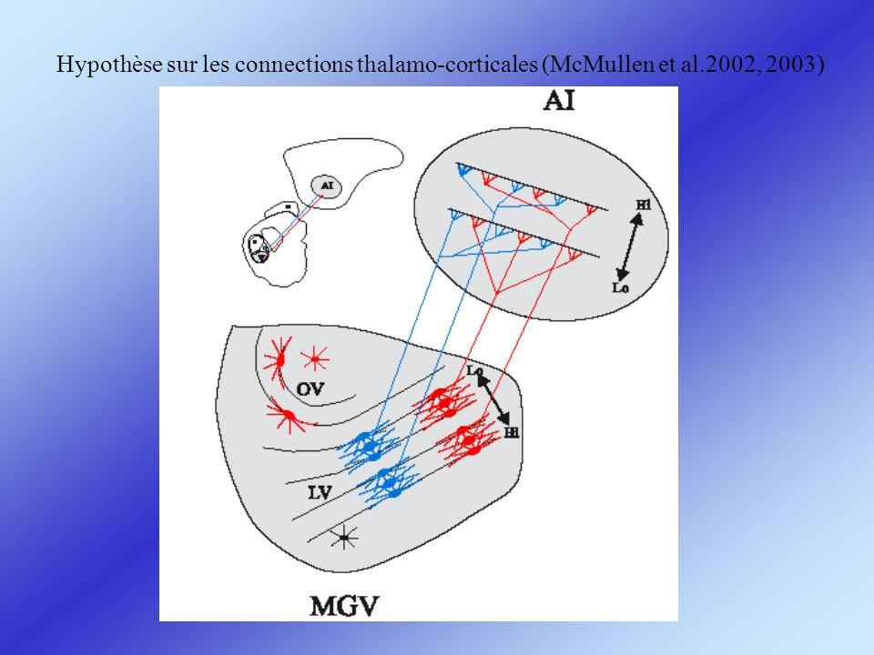 Hypothèse sur les connections thalamo-corticales (McMullen et al.2002, 2003)