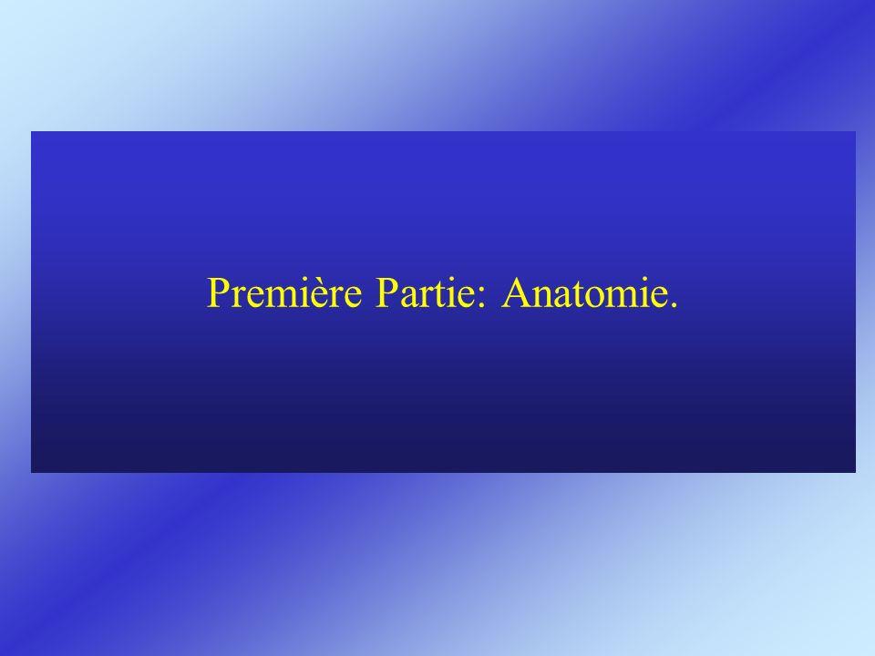 Première Partie: Anatomie.