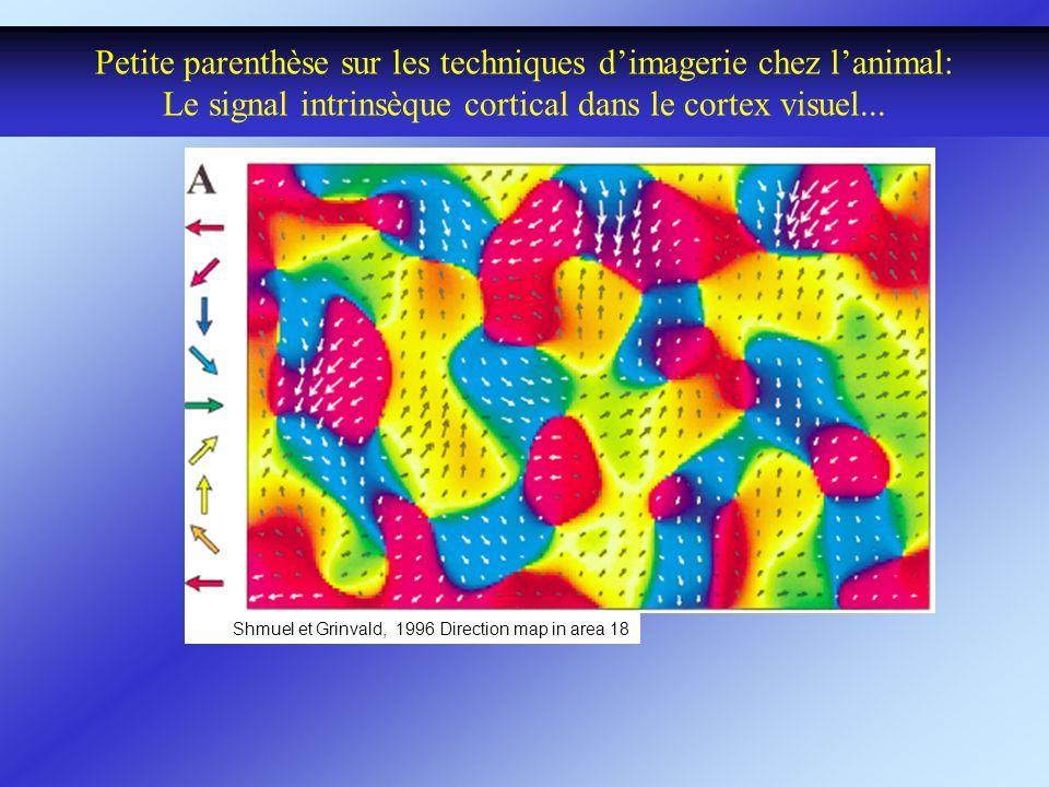 Petite parenthèse sur les techniques dimagerie chez lanimal: Le signal intrinsèque cortical dans le cortex visuel... Shmuel et Grinvald, 1996 Directio