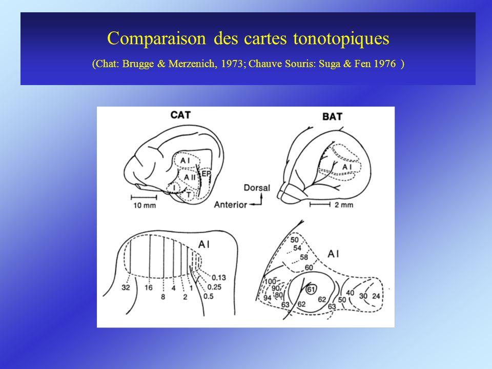 Comparaison des cartes tonotopiques (Chat: Brugge & Merzenich, 1973; Chauve Souris: Suga & Fen 1976 )