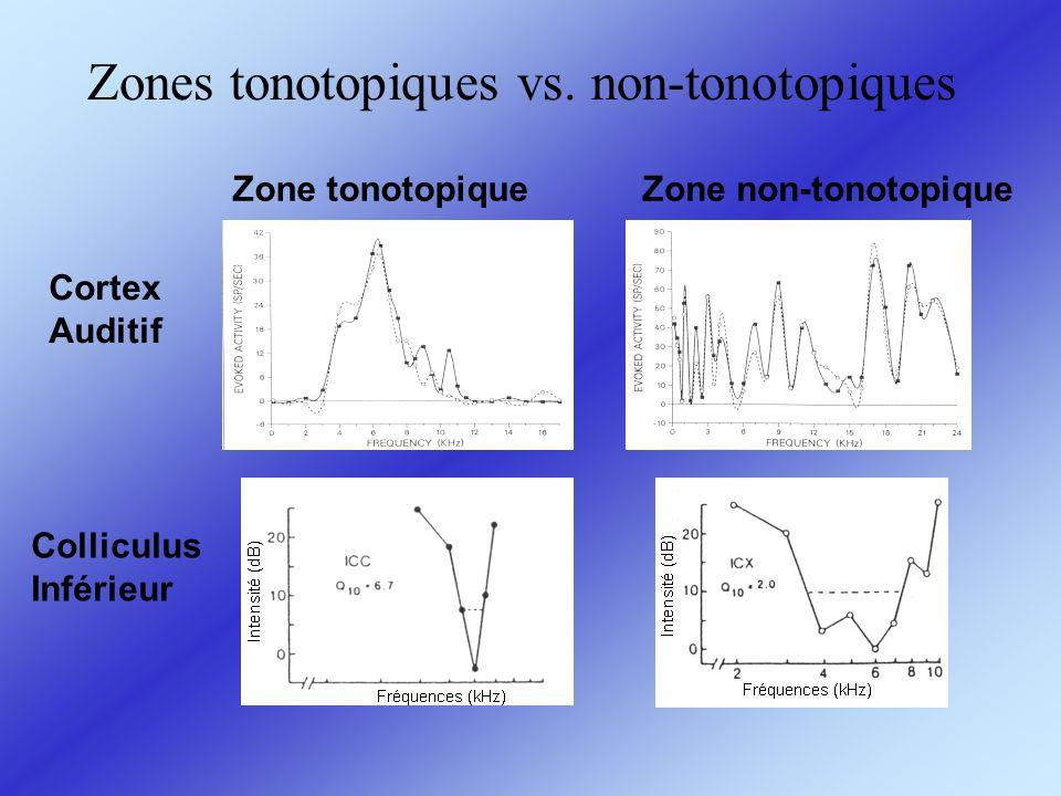 Zones tonotopiques vs. non-tonotopiques Colliculus Inférieur Cortex Auditif Zone tonotopiqueZone non-tonotopique
